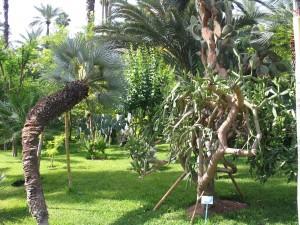 Mar2005_138_marrakech_giardini_della_menara