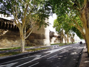 img_388_Avignone