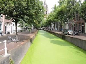 DSCN1131_Delft