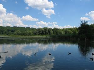 Lago_di_Alserio_2009_1